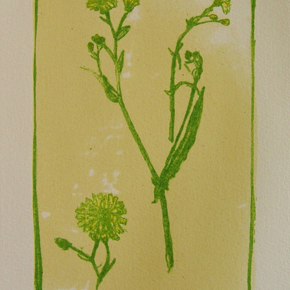 steendruk - klein streepzaad 20 x 13 cm